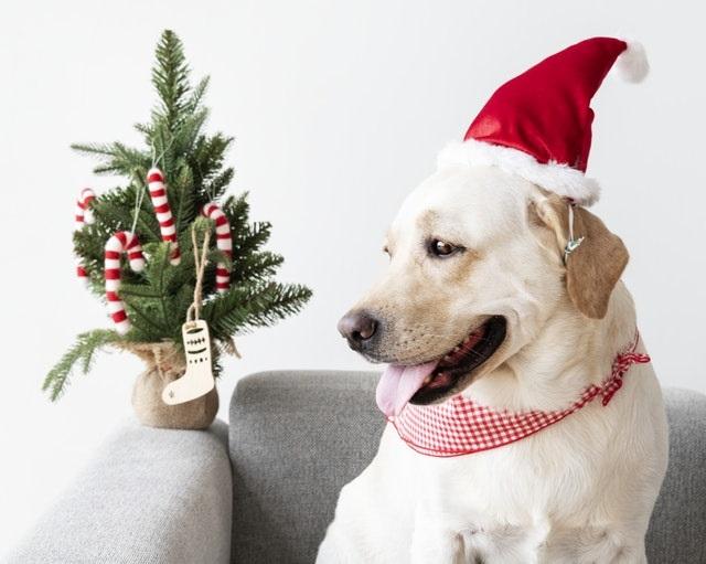 A legjobb 5 karácsonyi ötlet a kutyusodnak!