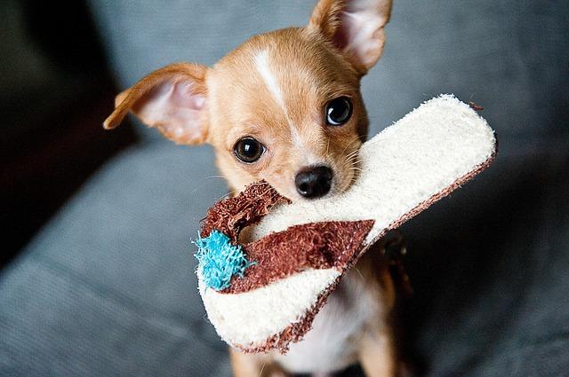 3 fontos tipp, ha egész nap egyedül van a kutyád, amíg dolgozol!