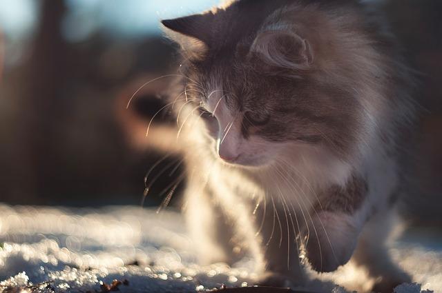 A cicád is fázik ebben a hidegben?