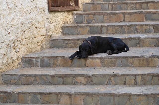 Tényleg rosszat tesz a lépcsőzés a kutyáknak?