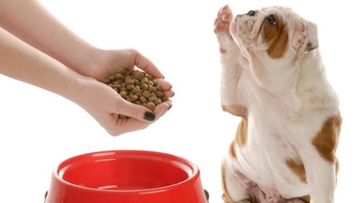 5 + 1 dolog, amit soha ne adj a kutyádnak!