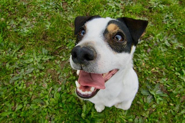 Figyelj oda a kutyád fogainak egészségére!
