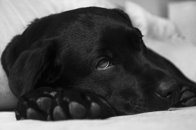 Honnan tudom hogy beteg a kutyám?