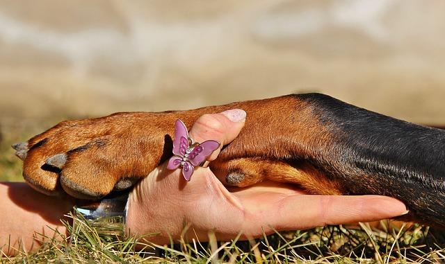 Ápold a kutyusod körmeit!