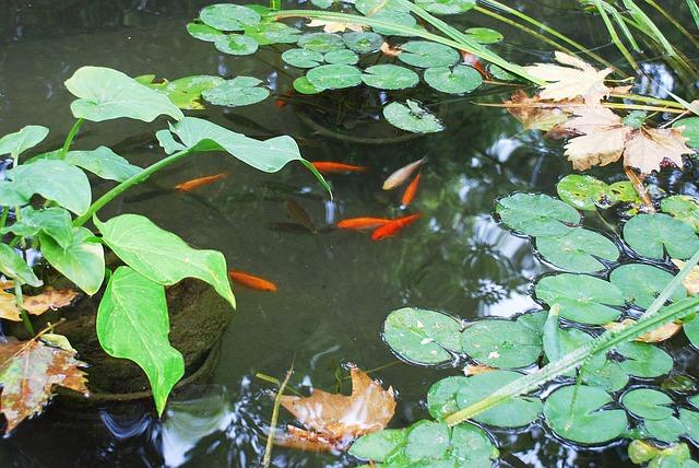 5 tipp a kerti tóval kapcsolatos tavaszi munkálatokhoz!