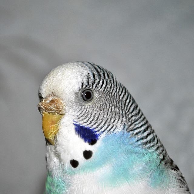 Neked jó választás egy papagáj háziállatnak?